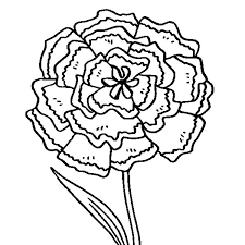 Pin Drawn Carnation Coloring 5