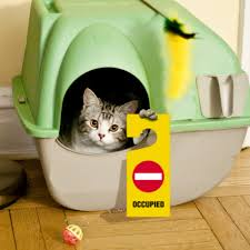 cat stop why did my cat stop using the litter box