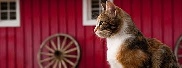 Cat #2 - Red Barn Cat Rescue Barn Rabbit Rescue Driving The Rusty 200 Abdoned 56 Chevy Cheap Truck Challenge Central Whidbey Island Fire Responds To At The Smith Injured Barn Owl Rescued Wildlife Friends Foundation Thailand Old Barns Long May They Live Shelter And Stand In Green Open Unboxing Paw Patrol Roll Rockys And Play Fun The Rescue Barn Adopted Dogs Rvr Horse Takes Worst Cases To Heal Renew Tbocom Paw Patrol Rocky8217s Track Set Walmartcom European Owl A Bird Rehabilitated Trained For Assortment Of 6 Small Dogs From Rescue Group Sit On Lavendar