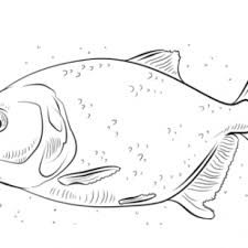Tuna Fish Coloring Page Print Of Flounders Pages Free Printable Swordfish Animal