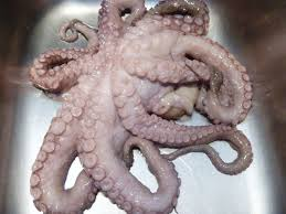 cuisiner poulpe frais recettes de la semaine poulpe pieuvre grillé