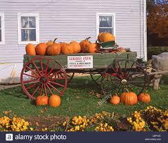 Connecticut Field Pumpkin by Wagon Pumpkin Stock Photos U0026 Wagon Pumpkin Stock Images Alamy