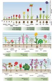 best 25 garden bulbs ideas on bulb flowers planting