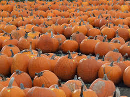 Heather Farms Pumpkin Patch by Mapping Greater New Orleans Area Pumpkin Patches