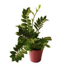 entretien plante grasse d interieur plante d intérieur facile d entretien recherche plante