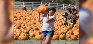 Pumpkin Patch Cal Poly Pomona by Tickets On Sale For Pumpkin Festival