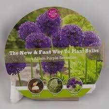 fall planted flower bulbs for sale nature nursery
