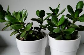 Good Plants For Bathroom by Plant Small House Plants Momentous Small Indoor House Plants Low
