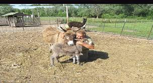 Pumpkin Patch Petting Zoo Illinois by Meadowbrookfun Farm U0026 Market