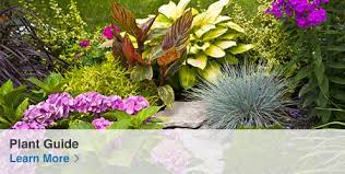 Shop the Lowe s Garden Center for all your gardening needs
