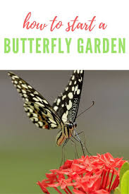 17 Best Ideas About Live Butterfly Garden Pinterest Butterfly