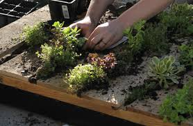 Water Your Wall Garden Thoroughly And Let It Remain Horizontal For 1 To 2 Weeks Allow Plants Take Root After You Can Set Upright