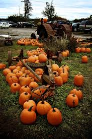 Pumpkin Patch Pittsburgh Area by 17 Best Images About P U M P K I N P A T C H On Pinterest