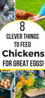 4266 Best Backyard Chickens Care & Health Images On Pinterest ... Best Backyard Chickens For Eggs Large And Beautiful Photos 4266 Best Backyard Chickens Care Health Images On Pinterest Raising Dummies Modern Farmer Eggs Part 1 Getting Baby Chicks For 1101 Emma Chicken Breeds And Meat With 15 Popular Of Archives Coffee In The Cornfields Balancing Mrs Simply Southern The Chick Handling Storage Of Fresh From Laying Brown 5 Hens Your