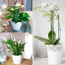 zimmerpflanzen set weißes wohnzimmer