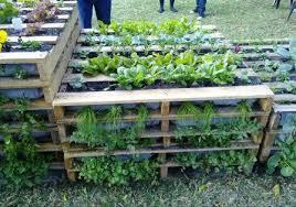 Vertical Pallet Gardening