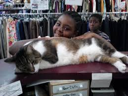 adopt a cat baxter jpg