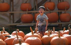 Clarence New York Pumpkin Farm by 100 Plus Things Carve Out Time For The Great Pumpkin Farm The