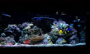 Renes 60 Gal Reef - After Re-aquascaping The Reef Tank Gallery Home Design Aquascaping Aquarium Designs Aquascape Simple And Effective Guide On Reef Aquascaping News Reef Builders Pin By Dwells Saltwater Tank Pinterest Aquariums Quick Update New Aquascape Of The 120 Youtube Large Custom Living Coral Nyc Live Rock Set Up Idea Fish For How To A Aquarium New 30g Cube General Discussion Nanoreefcom Rockscape Drill Cement Your Gmacreef Minimalist 2reef Forum