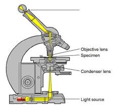 Difference between Light Microscope and Electron Microscope Light