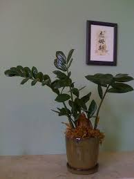 Fake Plants For The Bathroom by Zz Plant Care Instructions How To Grow Zz Plants