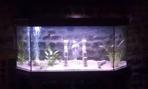 débutante à besoin de conseil aquarium 240 litres