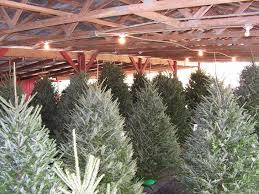 Eustis Christmas Tree Farm by The Best Christmas Tree Farms And Santa Villages Near Orlando