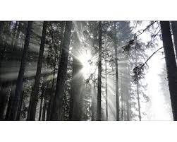 giclèe sundrenched forest iv 160 cm x 90 cm kaufen bei obi