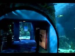 Moody Gardens Aquarium Galveston TX