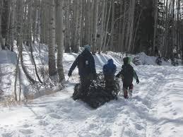 Colorado Springs Christmas Tree Permit 2014 by Celebrate Haiku Homestead