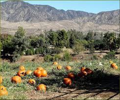 Pumpkin Patch Fort Collins by 47 Best Pumpkin Patch Images On Pinterest Pumpkin Patches
