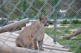 file zoo du mont faron toulon provence alpes côte d azur