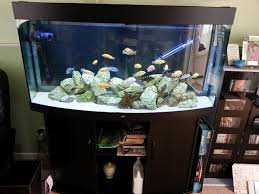juwel aquarium vision 260 juwel vision 260 bow front aquarium with cabinet and lots of