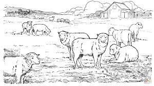 Coloriage Fête Du Mouton