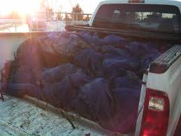 Oyster Seed In Truck | Starving Off The Land Truck Bed Accsories Tool Boxes Liners Racks Rails This Guys Shirt While Riding In A Truck Bed Funny Ram 1500 Stock Anchors Hauling An Rk Long Distance Airbedz Mattress Shark Tank Products The Best Spray On Liner Xtreme Drivein Autosound Dead Buck Atherclemenceau Man Sleeping Editorial Image Image Of People 121608470 Guide Gear Compact Tent 175422 Tents At Sportsmans Protection Of Pickup