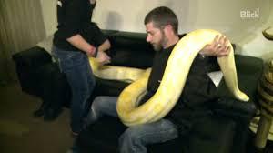 familie gómez mit 5 meter python im wohnzimmer