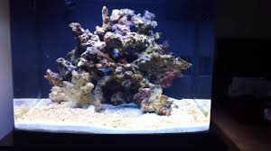 Coralife BioCube Basics: Week 1- Rock, Sand, & Water - YouTube Aquascape Designs Surripuinet Aquascaping Live Rocks In Your Saltwater Aquarium Columns A Saltwater Tank Callorecom Need Ideas General Rfkeeping Discussion Week 3 Aquascaping 120 Gal Rimless Update Youtube 55g Vertical Tank Ideas Saltwaterfish Forum Aquascape With Rocks Google Search Aquariums Pinterest Bring Back The Wall Rock News Reef Builders Walls For Building Tiger Fish Aquascapinglive Rock Help Tcmas Forums