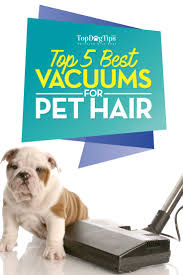 Small Dogs That Dont Shed Hair by 100 Dogs That Dont Shed Hair Uk Best 25 Small Dogs Ideas On