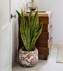 Best Plant For Bathroom by Bathroom Plants Archives Welcome To O U0027gorman Brothers Bath Fitter