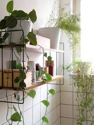 Small Plants For The Bathroom by Best 25 Bathroom Plants Ideas On Pinterest Best Bathroom Plants