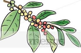 Coffee Beans Growing Clipart