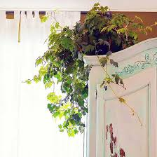 Small Plants For The Bathroom by 11 Plants That Will Grow Better In Your Bathroom