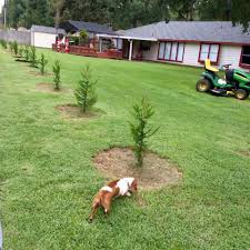 Leyland Cypress Christmas Trees Louisiana by Santa Bob Rbs U0026 Mrs Beth Claus The Professional Magical Couple