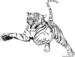 Coloriage Tigre Animal Zoo Adulte JeColoriecom