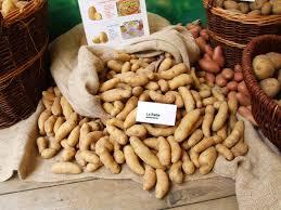 cuisiner des pommes de terre ratte ratte pomme de terre wikipédia