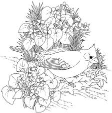Northern Cardinal And Violet Illinois Bird Flower Coloring Page From Category Select 21274 Printable Crafts Of Cartoons Nature