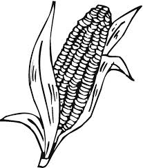 Corn On The Cob Coloring Page Click To Print Image Only Without Ads