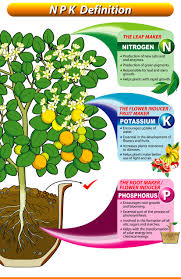 Fertilizer Requirements For Pumpkins by What Does Npk In My Fertilizer Mean Anyway