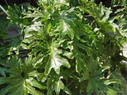 Garden Design Garden Design with Those Pesty Houseplants