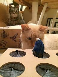 Cats Are Curious Creatures And This Notion Applied To Matts As Well They Loved Play With Boxes In The Past Matt Used Cut Out Holes